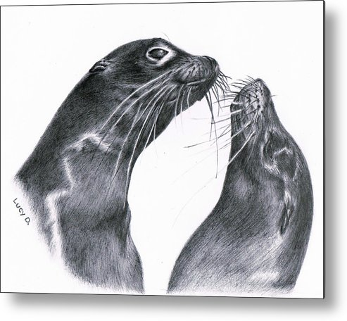 Sea Lion Metal Print featuring the drawing Lions by Lucy D