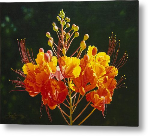 Floral Metal Print featuring the painting Pride Of Barbados by Gary Hernandez