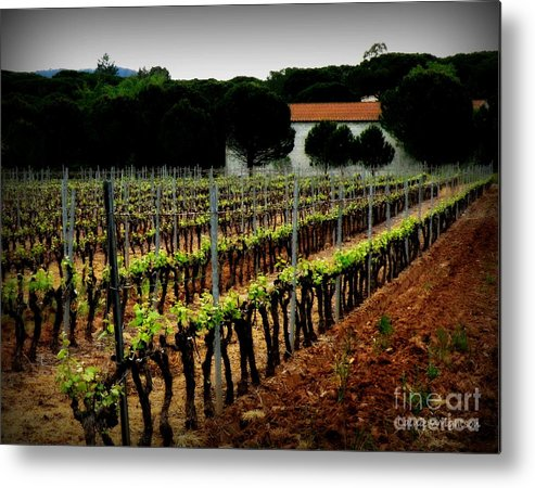Vineyard Metal Print featuring the photograph Provence Vineyard by Lainie Wrightson