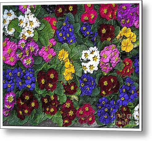 Rainbow Petals Petunia Colour Color Spectrum Blue Pink Yellow White Burgundy Flowers Leaves Metal Print featuring the photograph Rainbow Petals by H Koehler