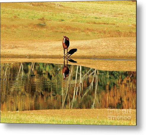 Chestnut Mare Metal Print featuring the photograph Reflection by Carol Lynn Coronios
