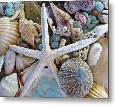 Seashells Metal Print featuring the photograph Sea Treasure by Colleen Kammerer