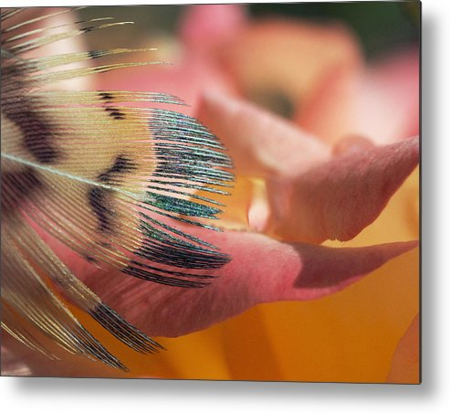 Roses Metal Print featuring the photograph Slip Of The Tongue by Kenneth Haley