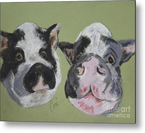 Pot Bellied Pigs Metal Print featuring the drawing Stirring The Pot by Cori Solomon
