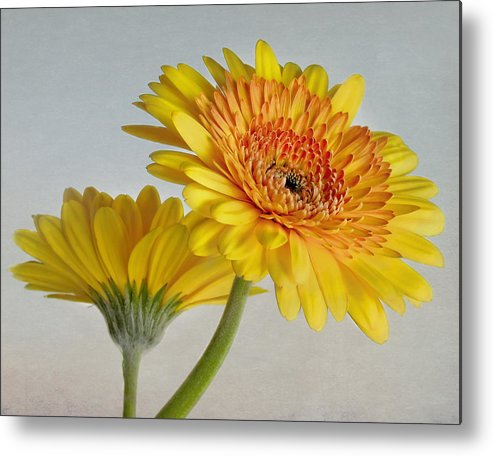Bloom Metal Print featuring the photograph Sunny Side Up by David and Carol Kelly