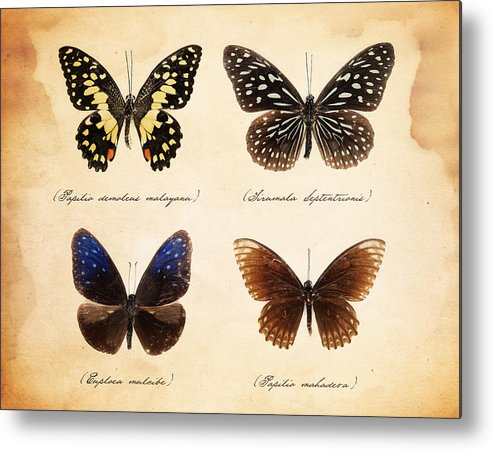 Fragility Metal Print featuring the photograph Taxidermy Butterflies by Roberto Adrian
