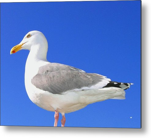 The Admiral Metal Print featuring the photograph The Admiral by Will Borden