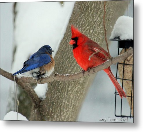 Birds Metal Print featuring the photograph Your Nest Or Mine by Travis Boyd