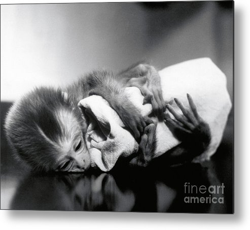Animal Research Metal Print featuring the photograph Animal Research by Science Source