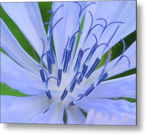 Blue Metal Print featuring the photograph Blue Wildflower by Paul Ward