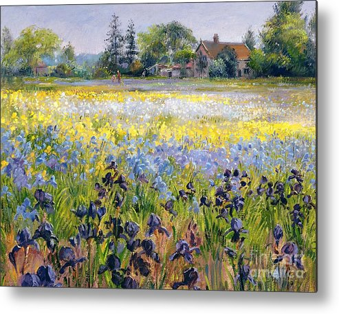 Landscape; Iris; Flower; Flowers; Irises; Tree; Trees; Field; House Metal Print featuring the painting Irises And Two Fir Trees by Timothy Easton