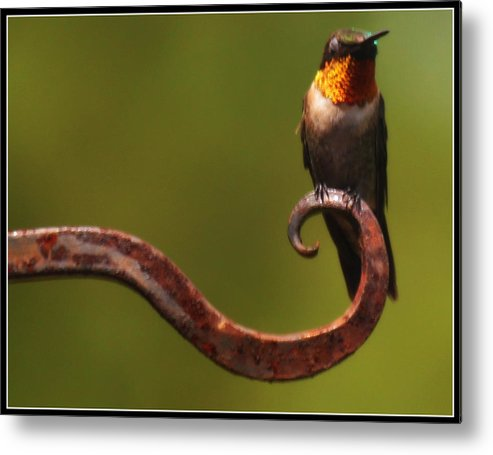 Nature Metal Print featuring the photograph Resting Hummingbird by Katie OKeefe
