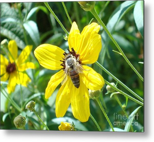 Bee Metal Print featuring the photograph Rumble With A Bee by Tina McKay-Brown