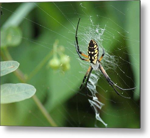 Spider Metal Print featuring the photograph Spiderweb by Kim Davis