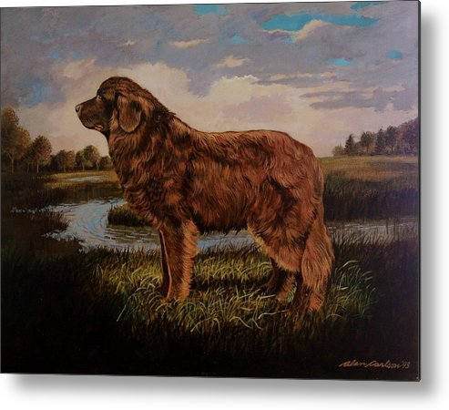 Newfoundland Water Dog Life Saving . Metal Print featuring the painting Beautiful Bear-like Friend. by Alan Carlson