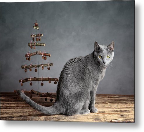 Cat Metal Print featuring the photograph Cat Christmas by Nailia Schwarz