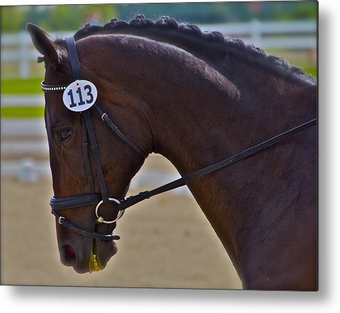 Dressage Metal Print featuring the photograph 113 Guiness by Sherri Cavalier