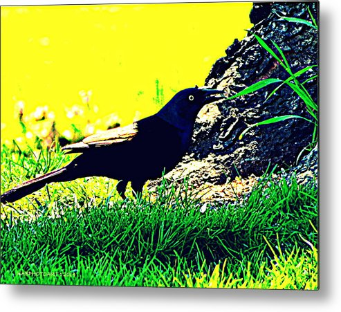 Blue-headed Bird Metal Print featuring the photograph Art Deco Grackle by Kathy Barney