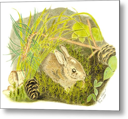 Rabbit Metal Print featuring the drawing Baby Bunny Down For The Night by Daniel Shuford