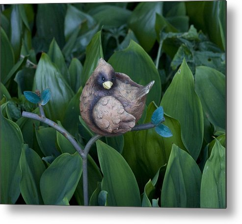 Photography Metal Print featuring the photograph Birdie by Bill Ades