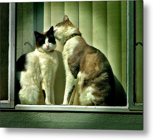 Cat Metal Print featuring the photograph Buds by Jason Leonti
