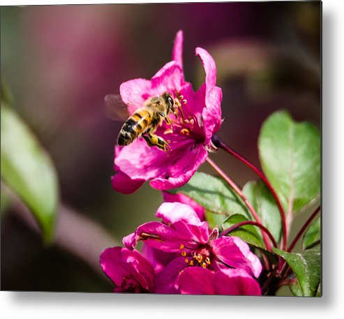 Bee Metal Print featuring the photograph Busy Bee by Steve Marler