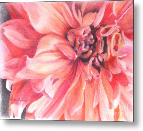 Flower Metal Print featuring the drawing Dahlia 1 by Phyllis Howard