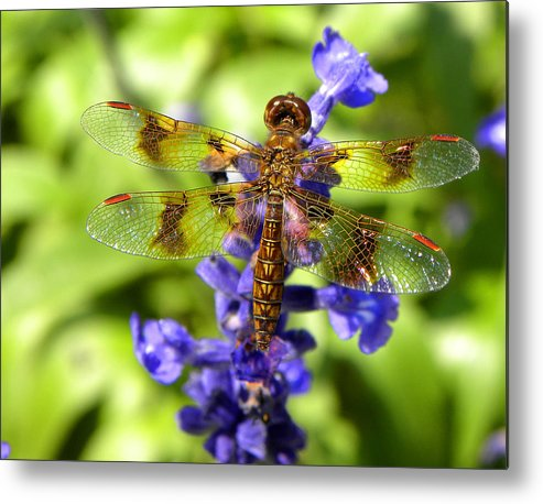 Dragonfly Metal Print featuring the photograph Dragonfly by Sandi OReilly