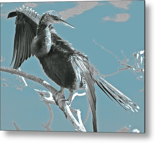 Metal Print featuring the photograph Drying My Wings by Joseph Reilly