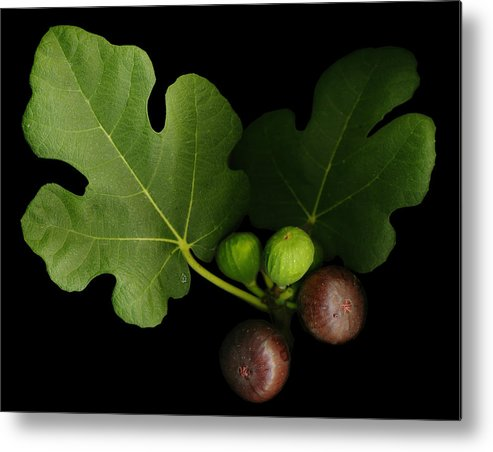 Figs Metal Print featuring the photograph Gelini's Fig Tree by Deborah J Humphries