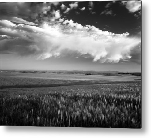 Grain Metal Print featuring the photograph Grain Field by Leland D Howard
