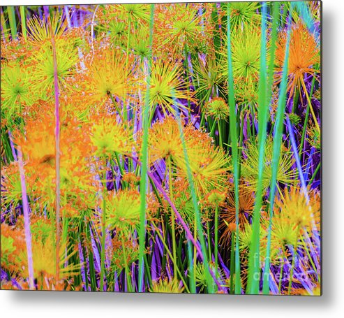 Ohia Metal Print featuring the photograph Hawaii Plants And Flowers by D Davila
