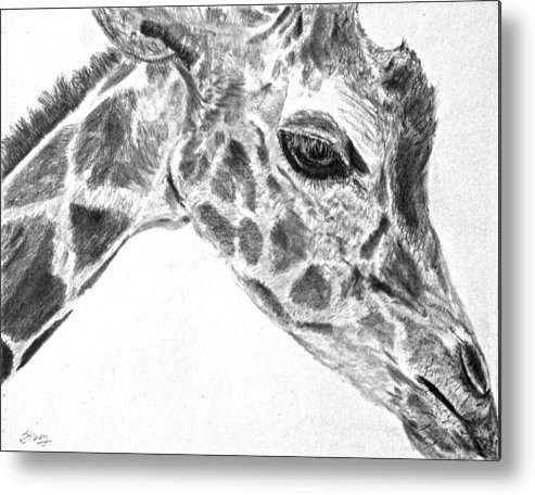 Giraffe Metal Print featuring the drawing Here's Looking At You by Tina Storey