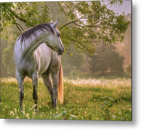 Horse Metal Print featuring the photograph Hindsight by Ron McGinnis