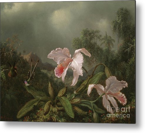 Jungle Orchids And Hummingbirds Metal Print featuring the painting Jungle Orchids And Hummingbirds, 1872 by Martin Johnson Heade