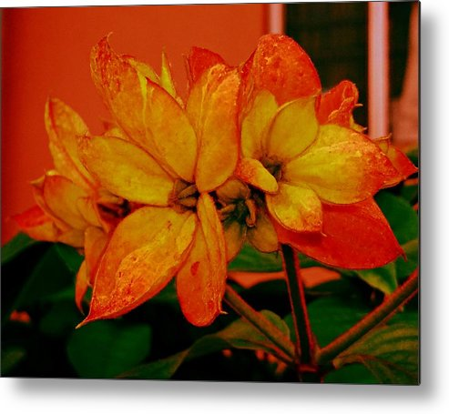 Flora Metal Print featuring the photograph Lovely Flowers1 by Nilu Mishra