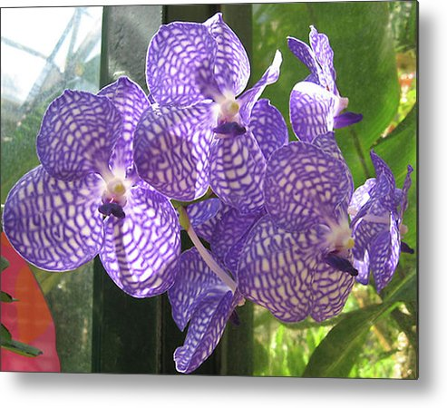 Orchid Metal Print featuring the photograph Orchid by Darren Stein