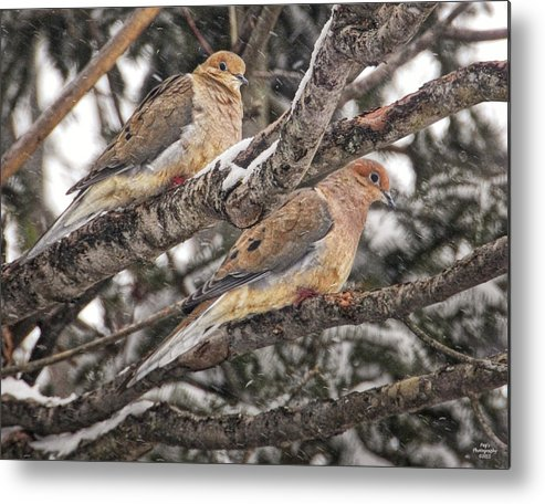 Morning Doves Metal Print featuring the photograph Pair Of Morning Doves by Peg Runyan