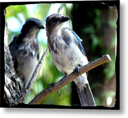 Bird Metal Print featuring the photograph Seeing Double by Ellen Lerner ODonnell