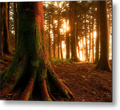 Log Cabin Metal Print featuring the photograph Sentiel Of The Forest by Jason Wade