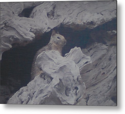 Squirrel Metal Print featuring the photograph Silent Observer by Pharris Art