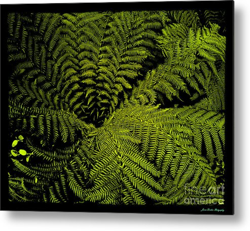 B&ws Metal Print featuring the photograph Springtime by James Dierker