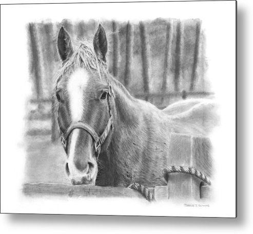 Horse Metal Print featuring the drawing Watching You by Douglas Kochanski