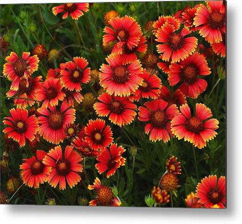 Summer Metal Print featuring the photograph Wild Flowers In Field Color Art Print by Randy Steele