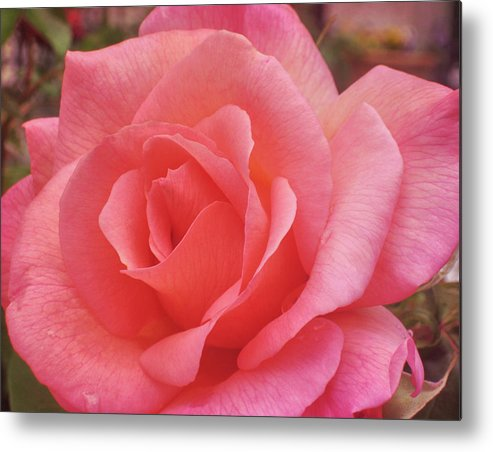 Rose Metal Print featuring the photograph Truly Pink by JAMART Photography