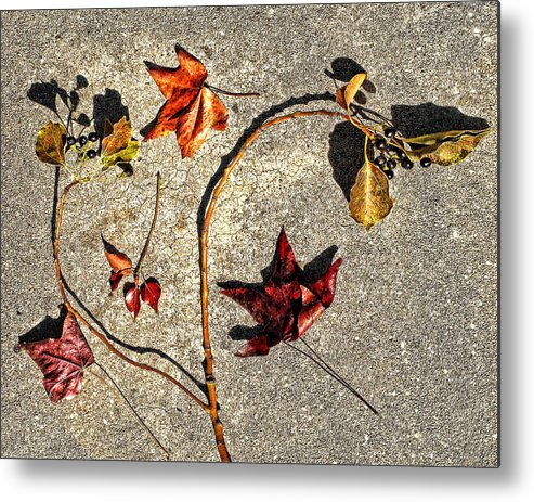 Leaves Metal Print featuring the photograph Autumn by Camille Lopez