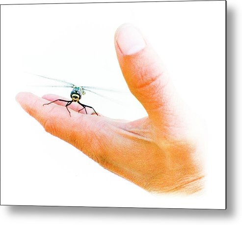 Dragonfly Metal Print featuring the photograph Dragonfly by Jason Leonti