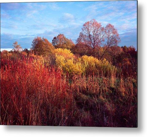 Autumn Metal Print featuring the photograph Autumn Light by Romeo Koitmae