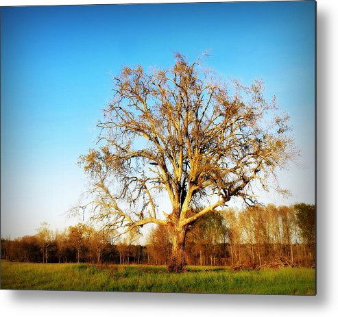 Oak Metal Print featuring the photograph Barely Standing by Pam Garcia