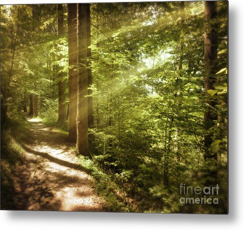 Nag004095 Metal Print featuring the photograph Eternal Woods by Edmund Nagele